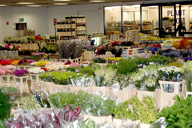 alinaozugikefik may flowers alabama